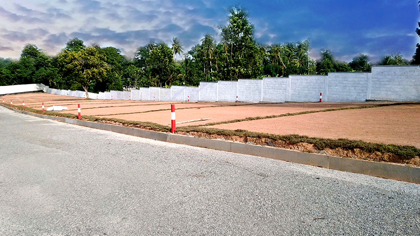 Piliyandala – Palm Grove